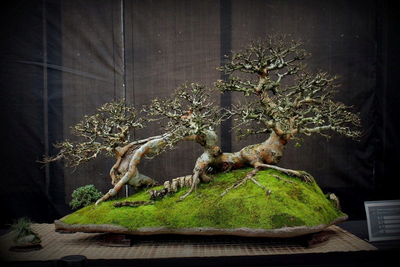 Bonsai Without Borders convention 15585110
