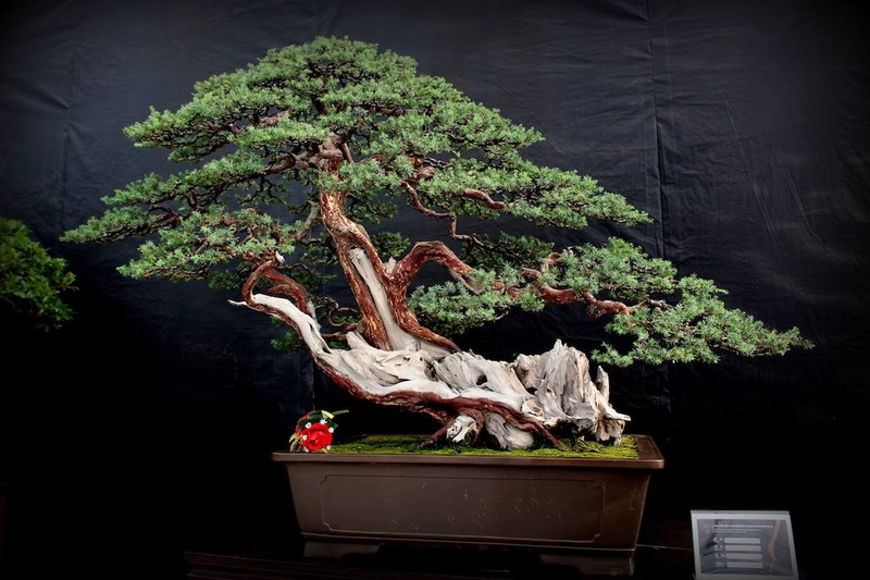Bonsai Without Borders convention 15591410