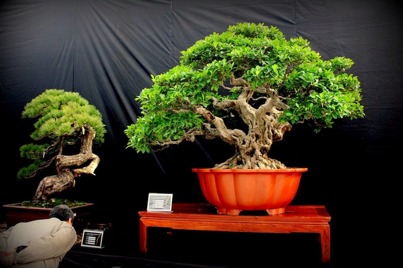 Bonsai Without Borders convention 15625710