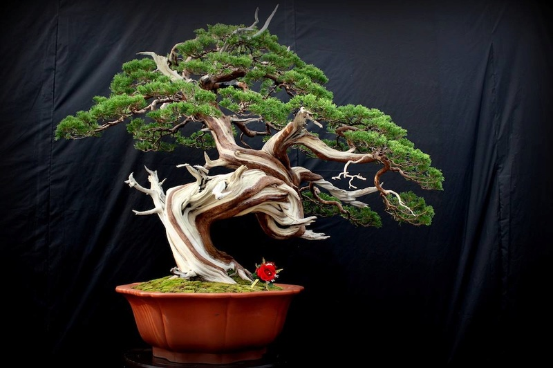 Bonsai Without Borders convention 15675610