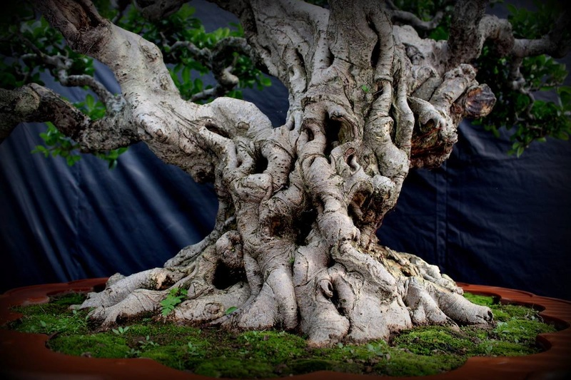 Bonsai Without Borders convention 15675710