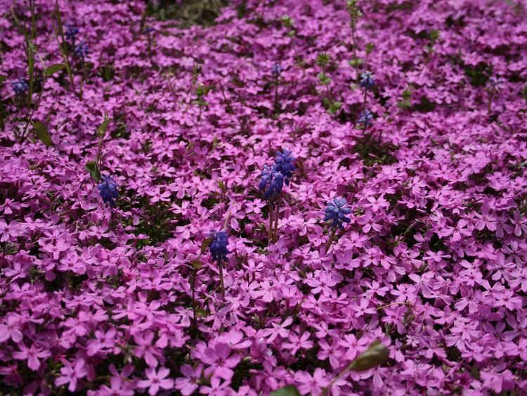 les fleurs - Page 2 08050610