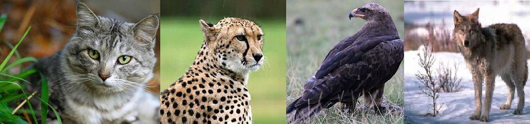 Ролевая про животных