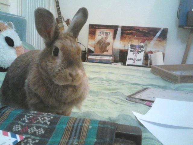Il était un lapin nommé Ludo. Dsc_0210