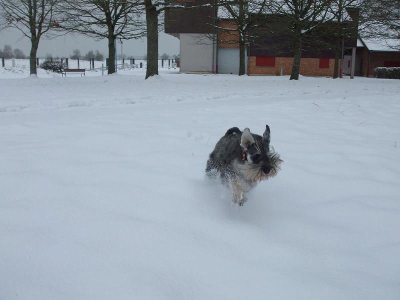 Nouveau CONCOURS PHOTOS: Un Schnauzer en hiver 07_jan10