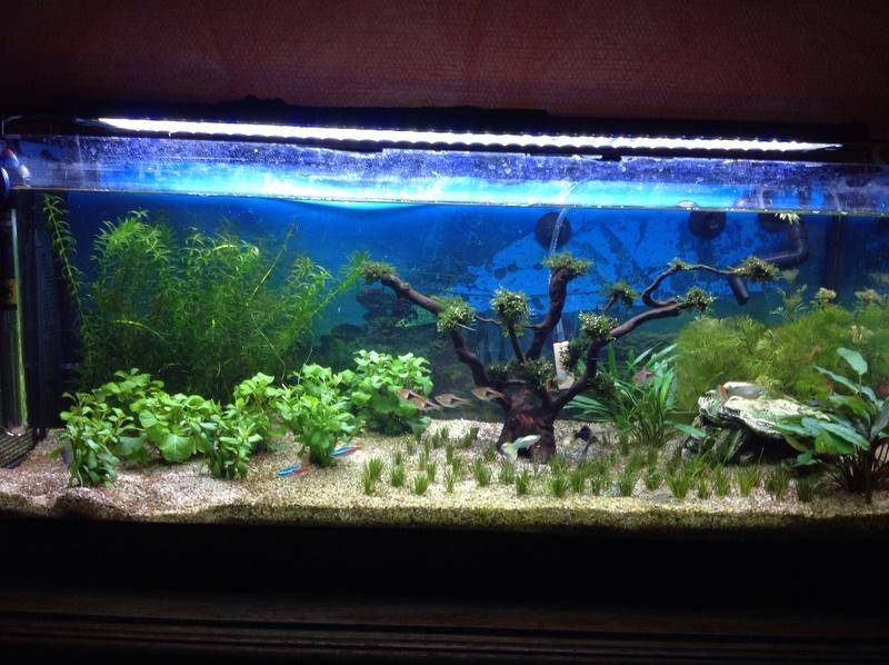 Bonjour les aquariophiles Image11