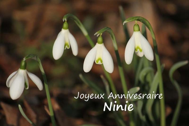 Bon anniversaire Ninie ! Perce_10