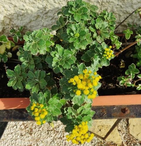 bouquets brumeux 009_4810