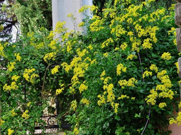 bouquets brumeux 011_6011