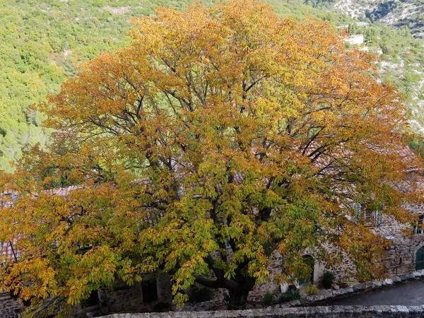 """Des arbres """"géants""""dans les petits jardins? 021_6013"""