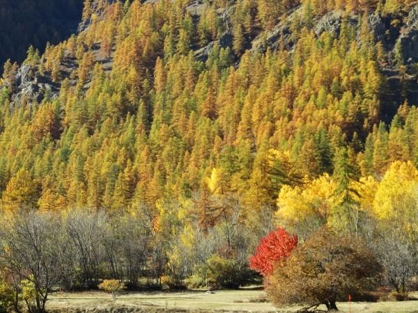 feuillages d'automne 2016 Automn18