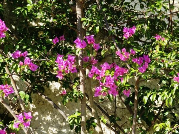 deux ou trois fleurs dans le vent Img_3818