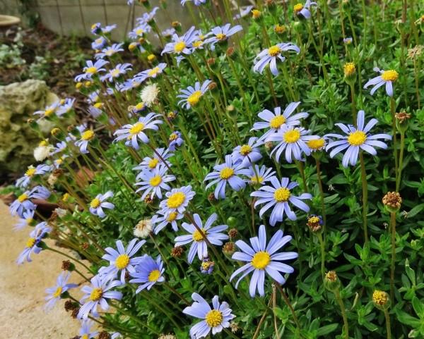 deux ou trois fleurs dans le vent Img_3910