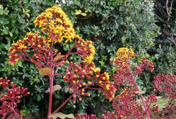 deux ou trois fleurs dans le vent Img_3911