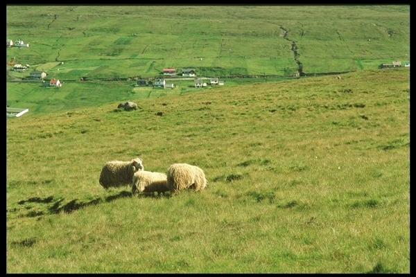 Islande - balade aux Iles Feroe Island14