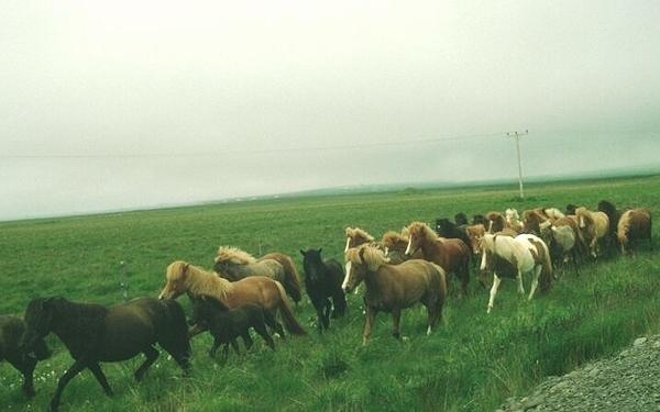 Islande - balade aux Iles Feroe Island43