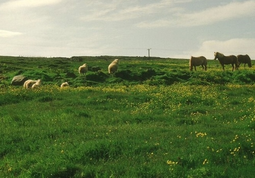 Islande - balade aux Iles Feroe Island47