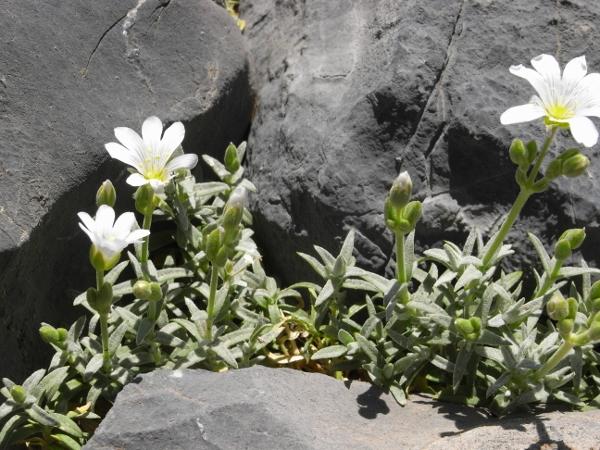 Maroc - flore de l'Atlas marocain - Page 2 Rimg0213