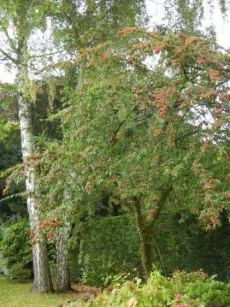 Couleurs d'automne Cotone11