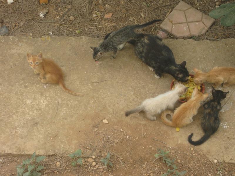 sqatte de mon jardin par les chattes  Cha_0010