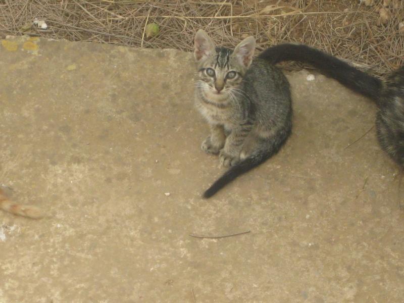 sqatte de mon jardin par les chattes  Cha_0012