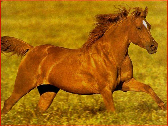 les chevaux.. - Page 15 83421110