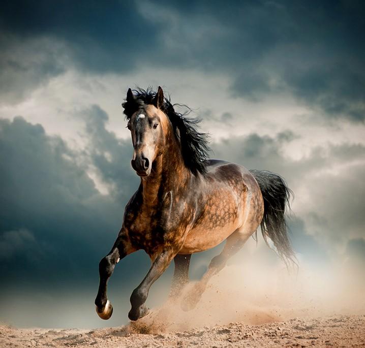 les chevaux.. - Page 16 Horses11