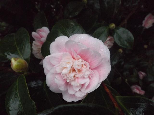 deux ou trois fleurs dans le vent - Page 2 Dscf4812