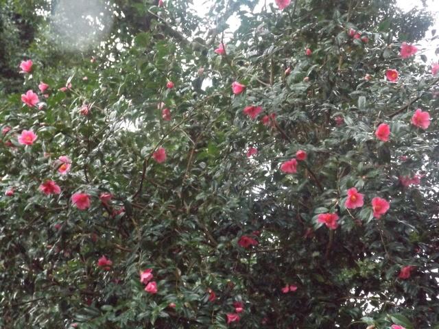deux ou trois fleurs dans le vent - Page 2 Dscf4813