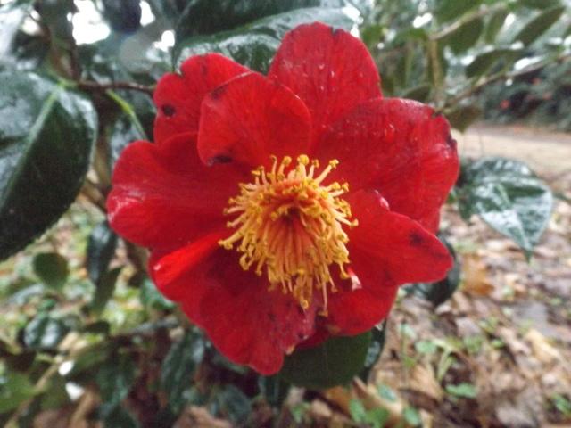 deux ou trois fleurs dans le vent - Page 2 Dscf4814