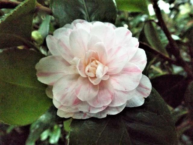deux ou trois fleurs dans le vent - Page 2 Dscf4827