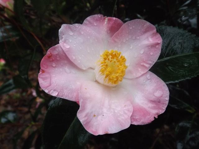 deux ou trois fleurs dans le vent - Page 2 Dscf4829
