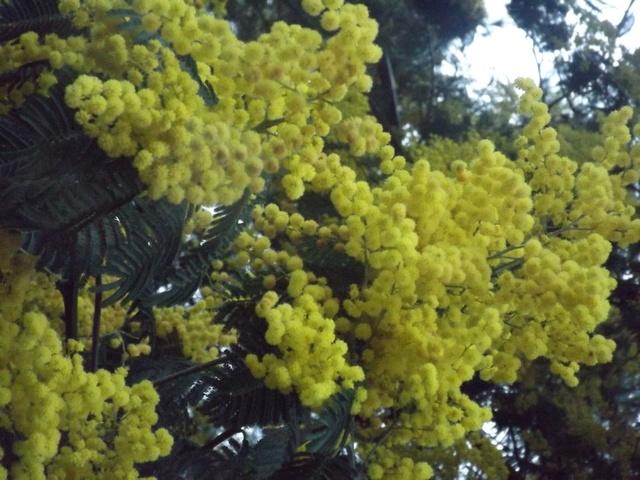 deux ou trois fleurs dans le vent - Page 2 Dscf4834