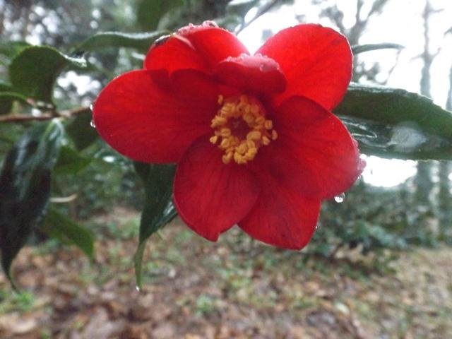 deux ou trois fleurs dans le vent - Page 2 Dscf4835
