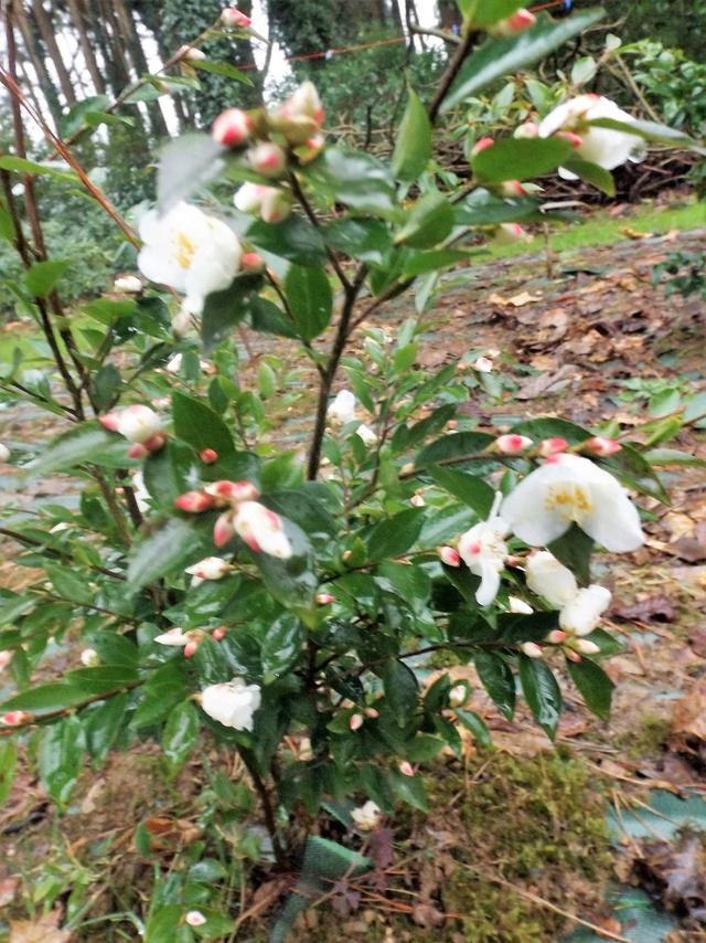 deux ou trois fleurs dans le vent - Page 2 Dscf4836