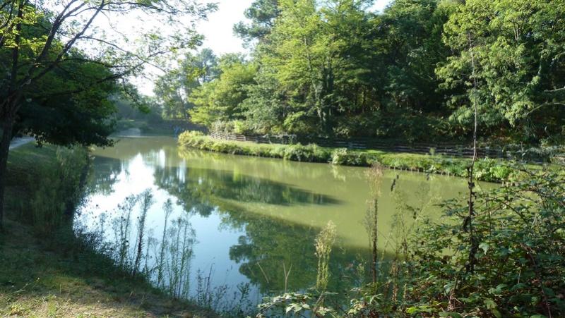 Pique-nique au bois de Thouars, dimanche 19 mars Captur15