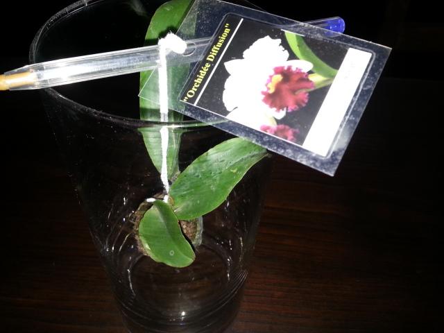 sous forum des orchidées- Comment entretenir son orchidée. 20170118