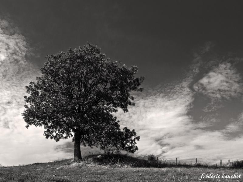 arbre solitaire Arbre_10