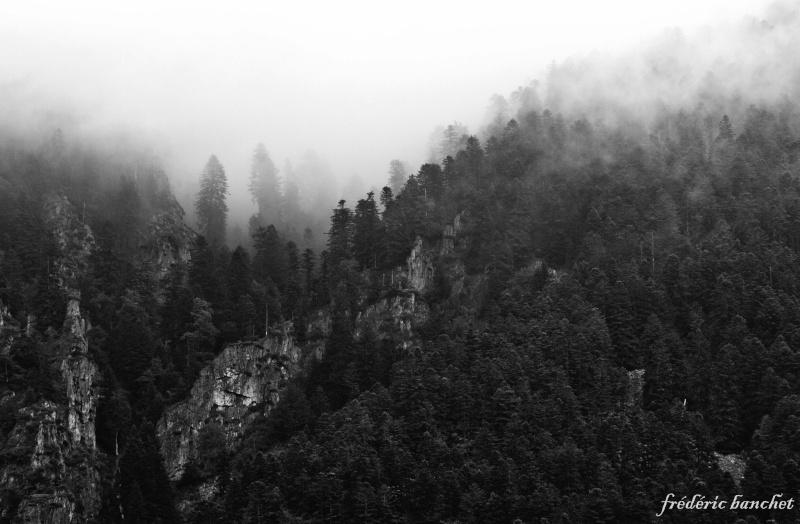 forêt dans le brouillard Forat_10