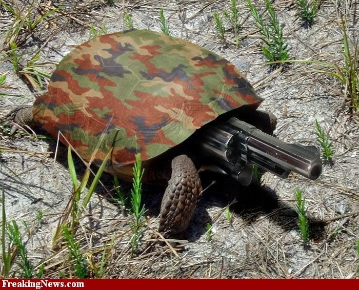 Conneries en tout genre - Page 9 Turtle10