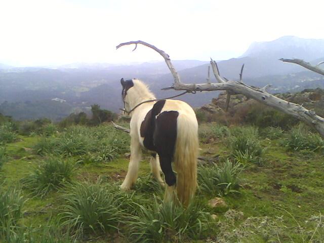 """Votez pour """"L' irish cob dans un joli paysage """" Img01510"""