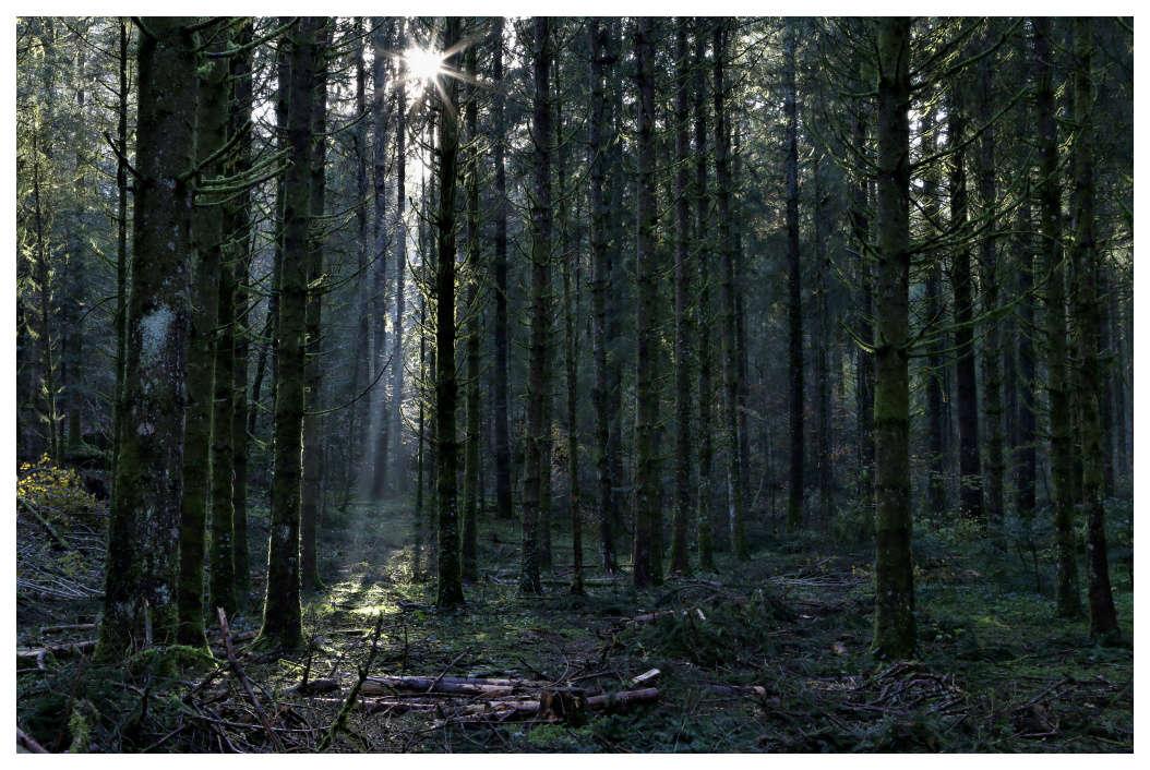 dans la forêt de Bonlieu Foryt10