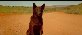 Red Dog - Die Freundschaft Red_do10