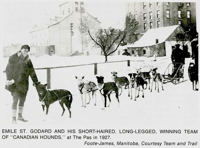 Traîneau à chiens ou Mushing - Page 5 Image10