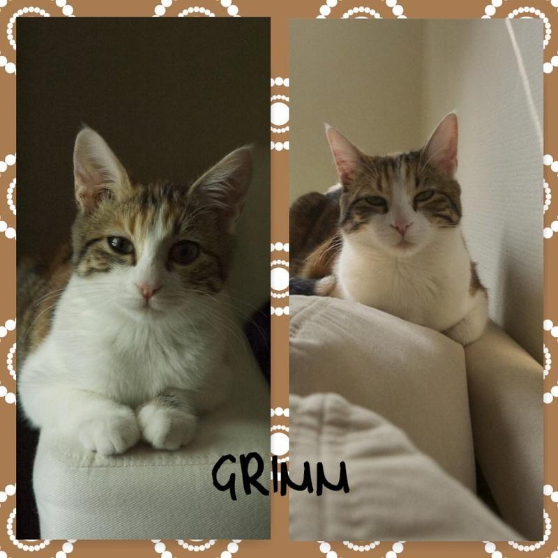 Spécials Photos : Avant/Après de nos chats - Page 16 Photot11