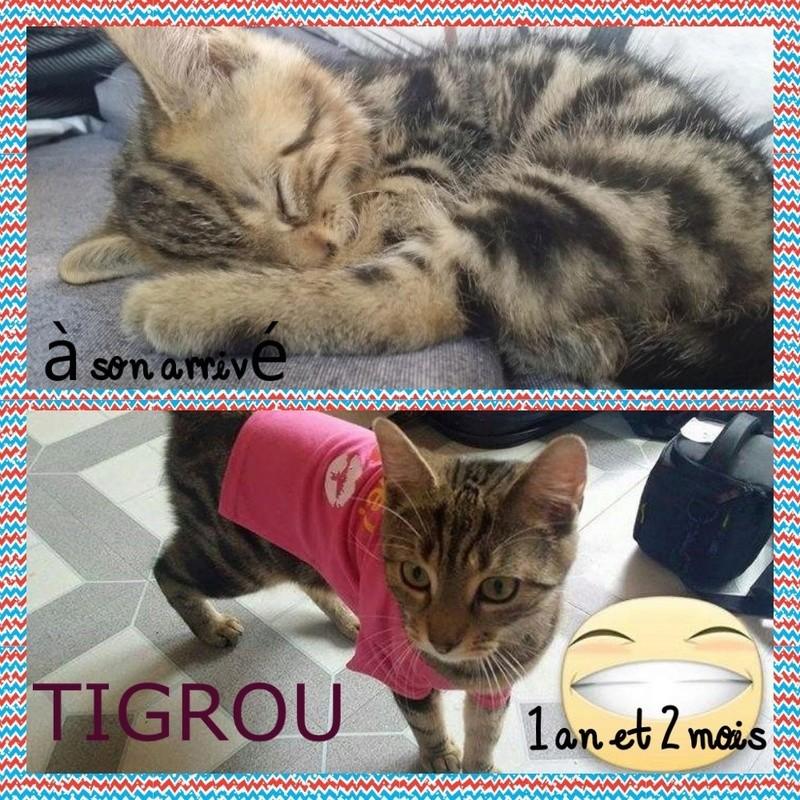 Spécials Photos : Avant/Après de nos chats - Page 16 Photot14