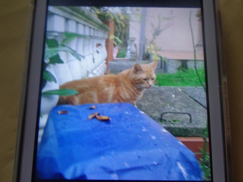 Trouvé chat roux Perget / Lycée International Dsc02710