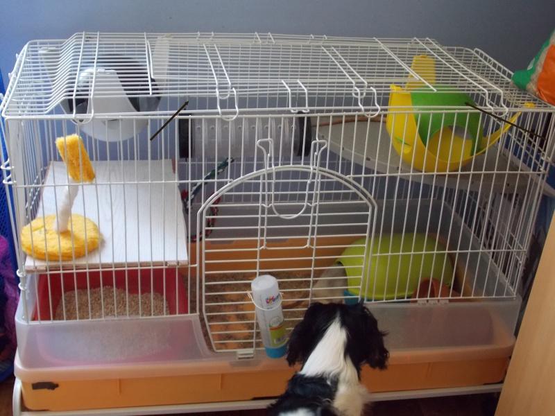 Choisir sa cage - Page 3 Dscn0914