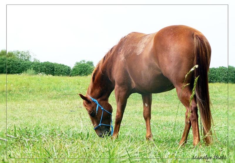 Fil sur les équidés (chevaux, ânes, mules) - Page 4 P1090515