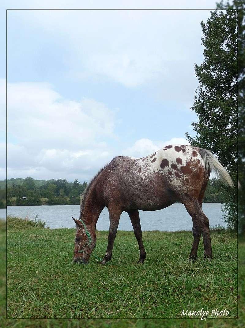 Fil sur les équidés (chevaux, ânes, mules) - Page 4 P1090516